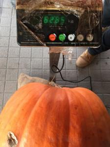 かぼちゃの重さ(2014)